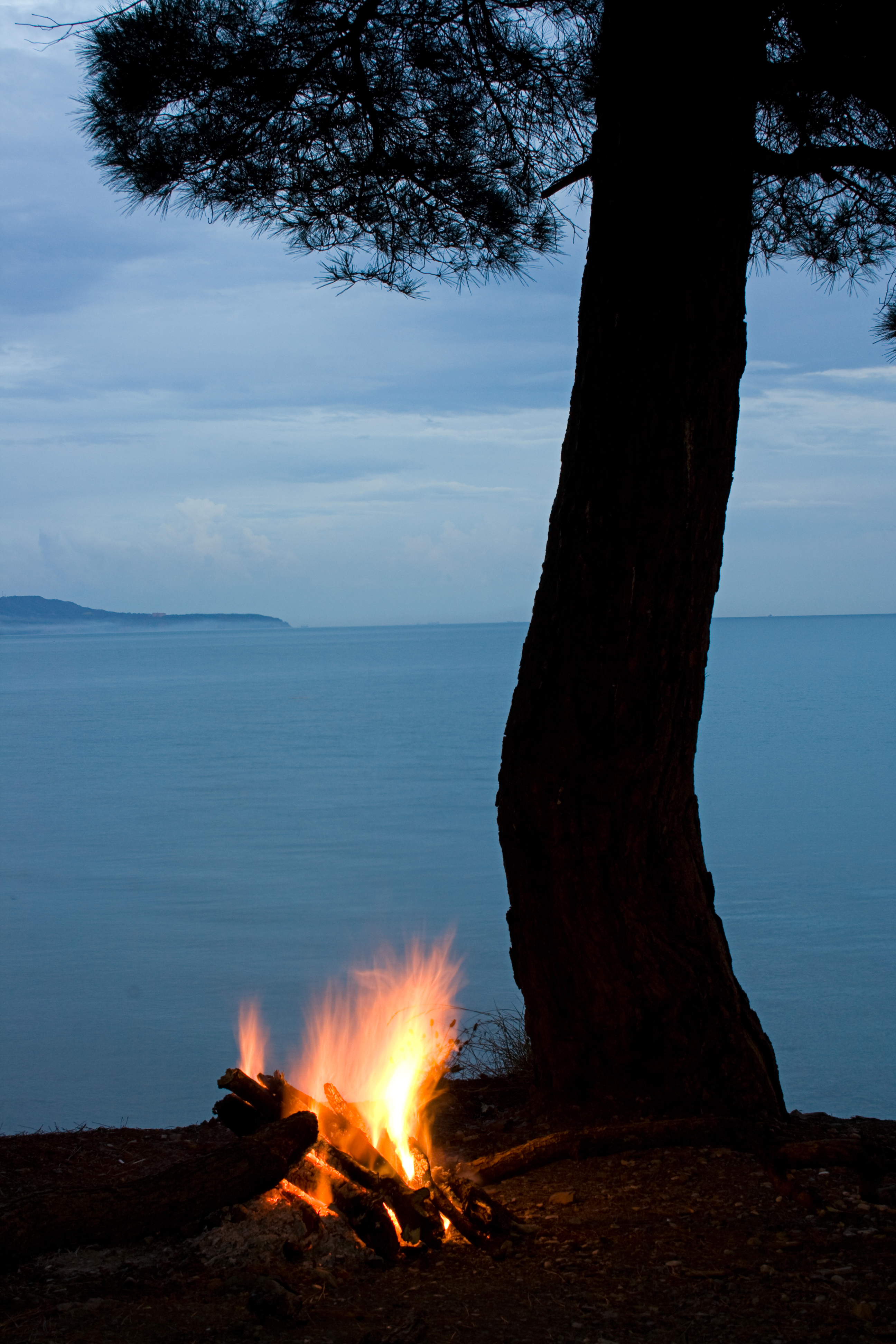 night scene: tree silhouette and campfire on sea background
